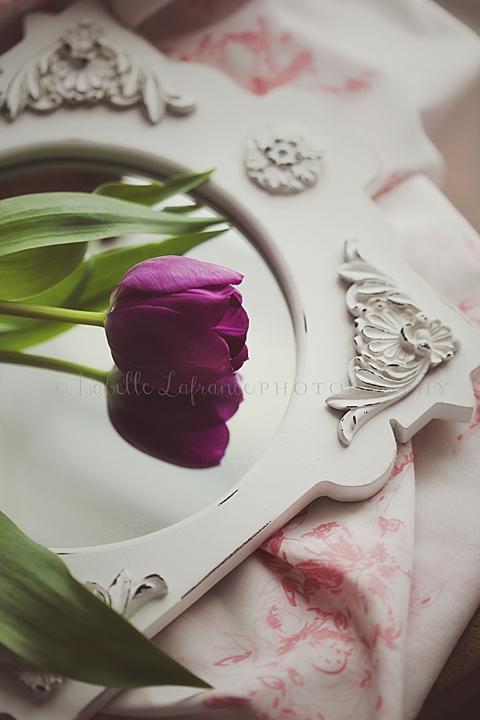 Tulip on mirror