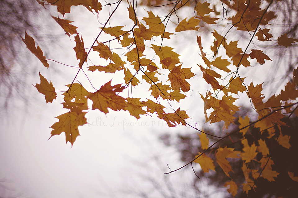 Leaves in the breeze