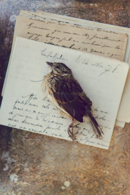Singing sparrow 5