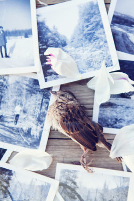 Singing sparrow 1